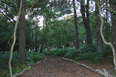 Colour photograph of a path stretching into the woods, its edges marked by tree trunks.