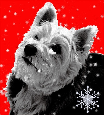 Stylised red, black and white image of West Highland terrier in the snow